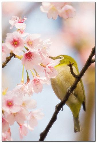 Primavera immagini poesie aforismi frasi pensieri - Franca raimondi aprite le finestre testo ...