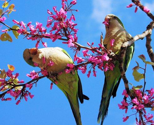 L 39 albero delle mele bentornata primavera - Primavera uccelli primavera colorazione pagine ...